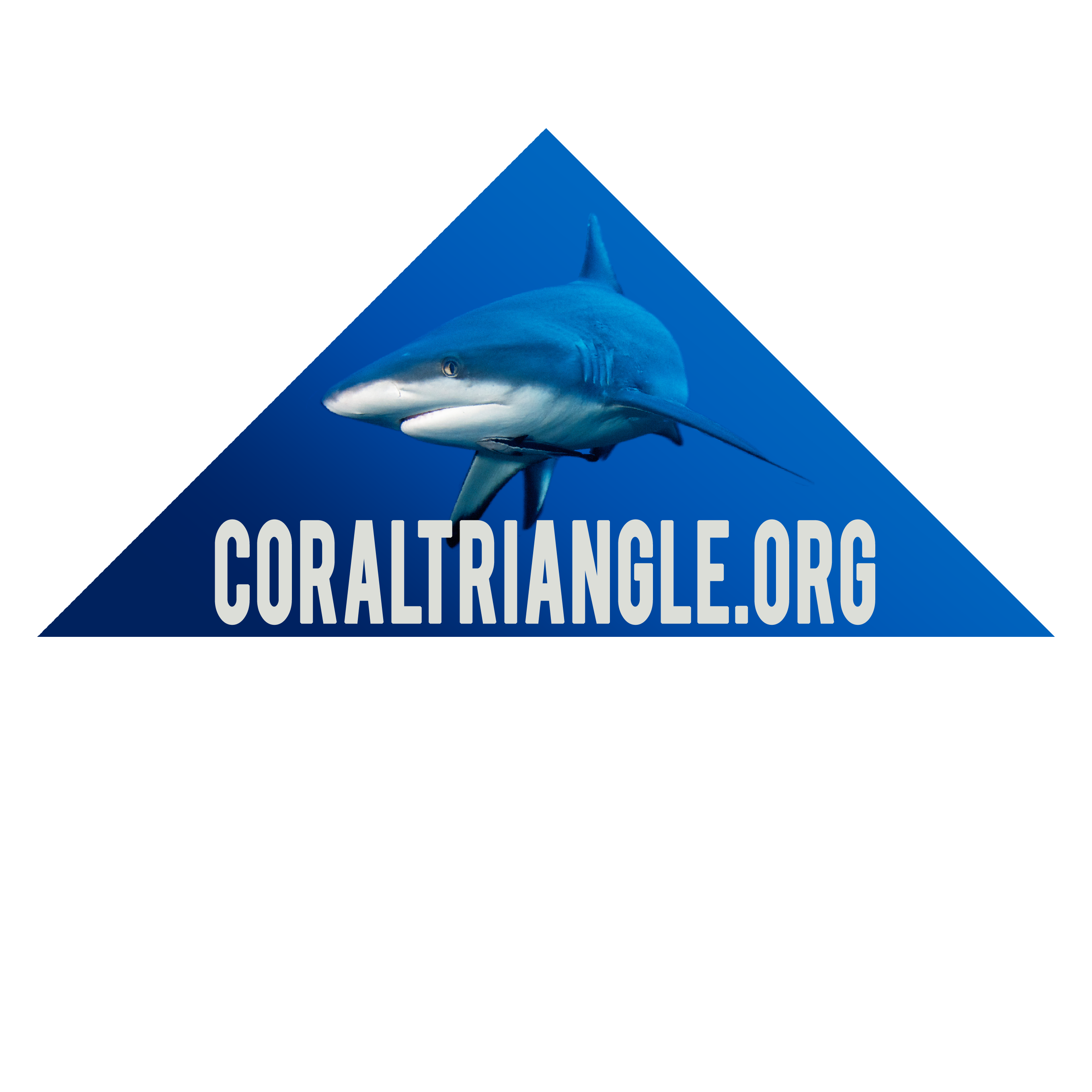 Photo of Sharks in the Coral Triangle